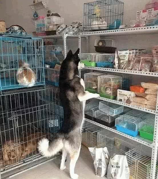 萌小它宠物店